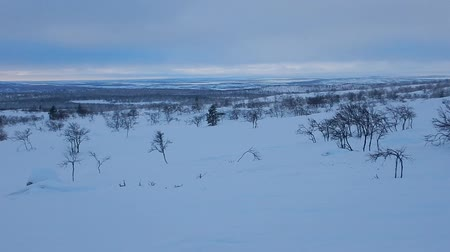 szron : beautiful lappland landscape panorama in winter