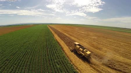 cultivo : Aerial flight over combine harvesting the yellow wheat rows Vídeos