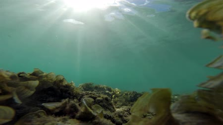 potápění : Underwater : clear sea water with moving grass