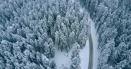 Aerial flight over winter forest with road