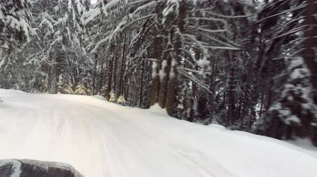 moving car in winter snow forest Стоковые видеозаписи
