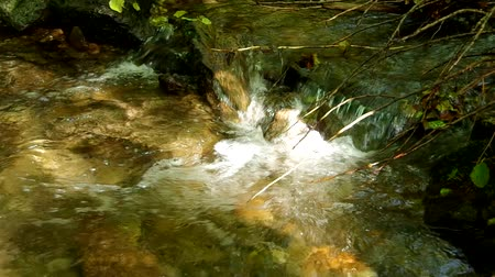 queda : Flowing brook in the forest