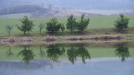 reflexão : Reflection of trees on the pond