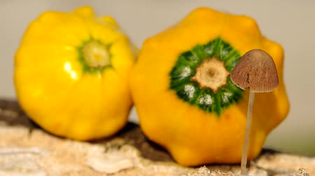 boletus edulis : Wild mushroom and decorative orange pumpkin in the wind