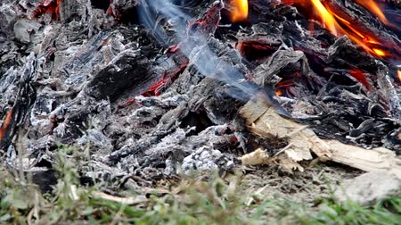 bogár : Burning wood attacked by the larvae in the garden