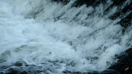 upstream : Fish jumping up in waterfall and going upstream for spawning