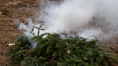 přirozeně : Fresh branches of the spruce tree do not burn because they are not dried.