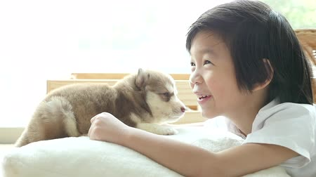 chupar : Cute asian child playing with siberian husky puppy at home