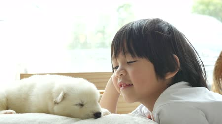 Cute asian child playing with siberian husky puppy at home