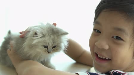 koťátko : Asian child playing with kitten on sofa at home slow motion Dostupné videozáznamy