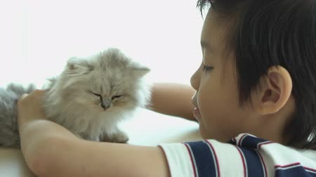 Asian child playing with kitten on sofa at home slow motion Stockvideo