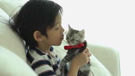 Asian child playing with kitten on sofa at home slow motion Wideo