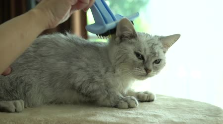 pat : Owner is grooming the fur of cute kitten after shower with hair dryer slow motion Stock Footage