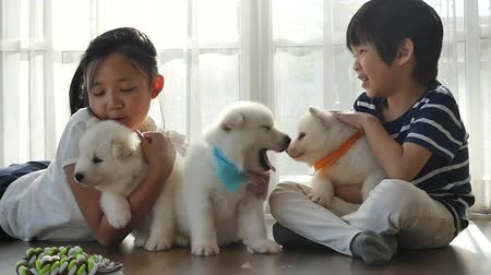 siberiano : Cute asian children playing with siberian husky puppies slow motion