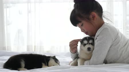 dog bite : Cute asian girl playing with siberian husky puppy slow motion Stock Footage