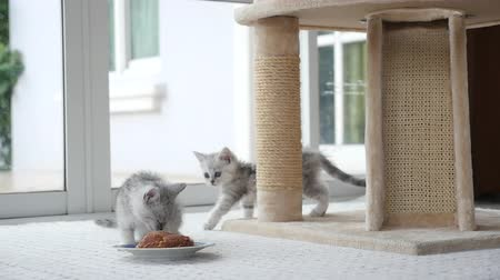 persie : Cute kitten eating food slow motion