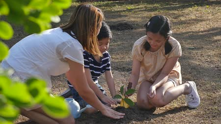 razem : Asian mother and children planting young tree in black soil together slow motion