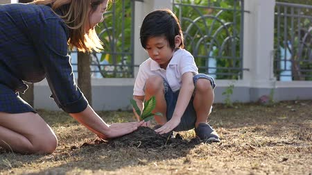 környezeti : Asian mother and son planting young tree in black soil together slow motion