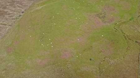 argyll : Aerial view of the scottish highlands with sheep on a hill Stock Footage