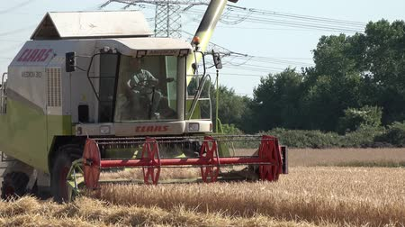 reaping : Moers  Germany - June 29 2017 - Combine harvester reaping wheat Stock Footage