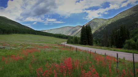 ranč : (1270) Beautiful Summer High Mountain Wilderness Landscape with Meadow of Wildflowers and Country Road - Aspen Colorado