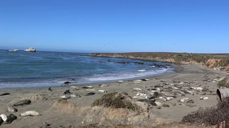 Elephant Seal Vista Point in San Simeon, California, a popular landmark along Coastal Highway 1