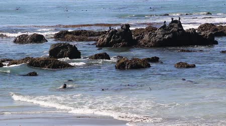 Elephant Seal Vista Point in San Simeon, California, a popular landmark along Coastal Highway 1.