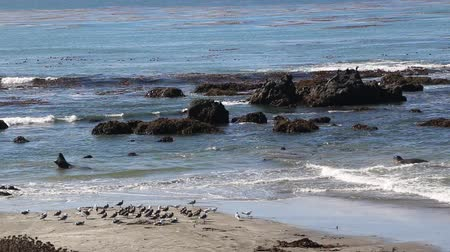západ : Elephant Seal Vista Point in San Simeon, California, a popular landmark along Coastal Highway 1.