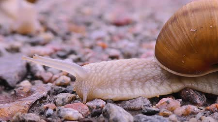 asfalto : Snail is crossing the street