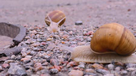 asfalto : Snails is crossing the street