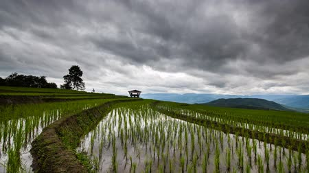 zákaz : Timelapse rice field of Ban parongpong in Chiangmai, Thailand.