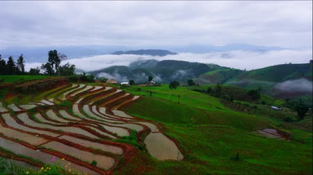 орошение : Timelapse rice field of Ban parongpong in Chiangmai, Thailand.