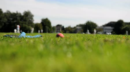 wicket : Cricket ball with wicket keeping glove