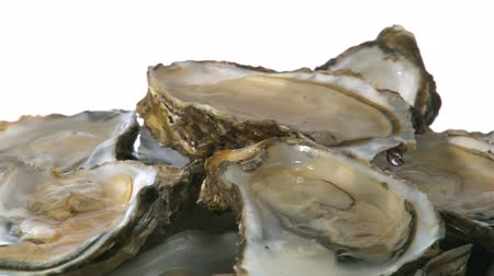 ostrygi : oysters close up  Wideo