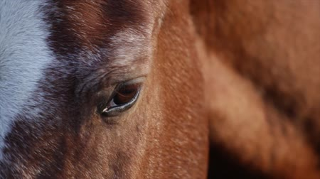 крупный план : Beautiful horse closeup