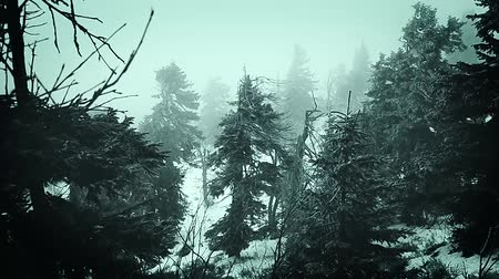 Словакия : Mountains winter the fog nature Slovakia Стоковые видеозаписи