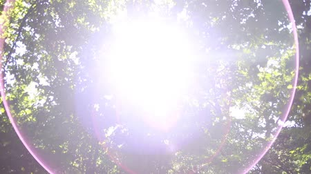 güneş ışını : Sun shining through trees. Beautiful lens flare