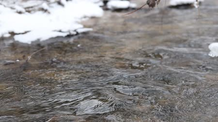 пробуждение : Close up shot of running streams of clean ice water. Spring has come. Snow melting on river banks. Fast flowing stream. Tree branches hanging over the creek. Nature is awakening. Beautiful landscape. Tranquil scene
