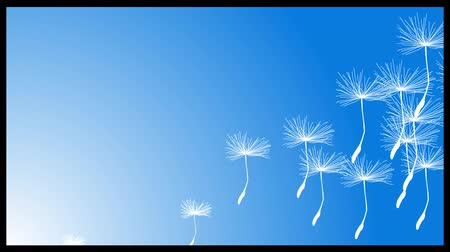 dmuchawiec : white fluffy dandelion seeds flying in the sky