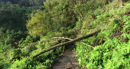 floresta tropical : Uprooted tree block trail in forest after super typhoon Mangkhut in China on 16 Sep 2018