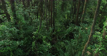 andar : Aerial view of flying along the trail in the morning tropical forest