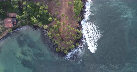 шри : Aerial view of island landscape with coconut trees on tropical beach drone looking down rotation 4k Стоковые видеозаписи