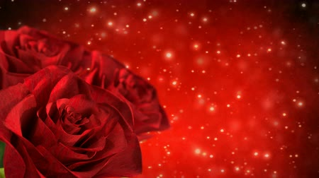 rotating red roses with bokeh particles - 3D render. seamless loop
