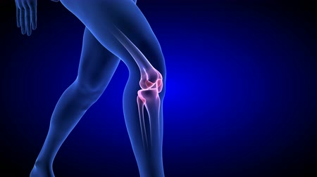 Knee Pain animation. Blue Human Anatomy Body 3D Scan render