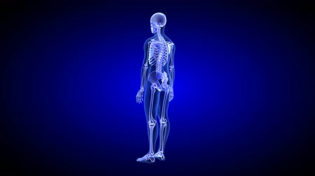 Blue Human Anatomy Body 3D Scan render - rotating seamless loop Стоковые видеозаписи