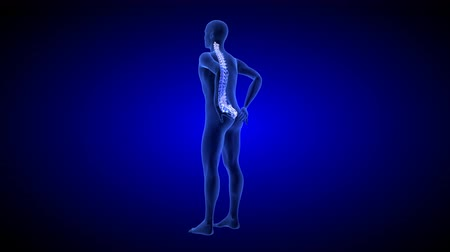 Spine Pain. Blue Human Anatomy Body 3D scan render on blue background - seamless loop