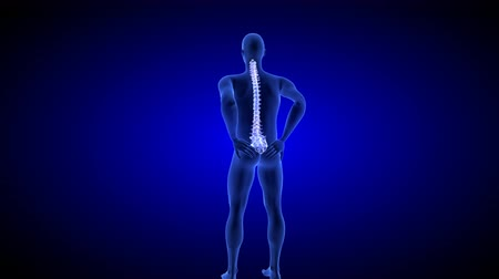Spine Pain. Blue Human Anatomy Body 3D scan render on blue background