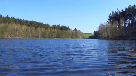 wavelet : Spring landscape with lake, forest and blue sky