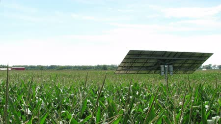 fotovoltaik : Time Lapse Solar Panel Tracking Sun in Corn Field Stok Video