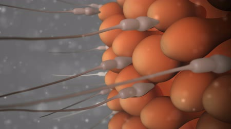 plemniki : This video shows sperm reaching the egg Wideo